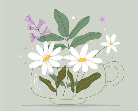 Herbal tea with chamomile and thyme.Natural herbs medicine. Vector design with herbal tea ingredients.Simple illustration. Cute Poster. Ilustração