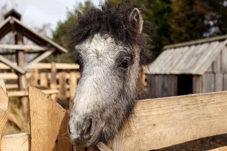 Gray pony in aviary, contact zoo Banco de Imagens - 101007610