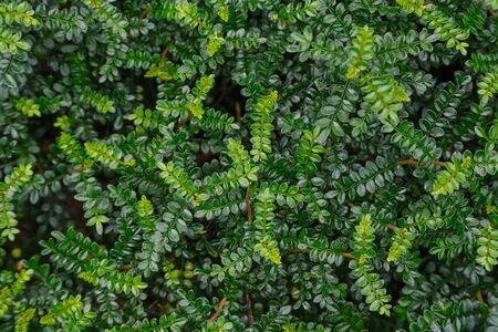 Background from green leaves from tropical plants.