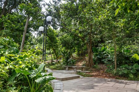 Stone walkway in a city park of tropical trees, Shenzhen, China
