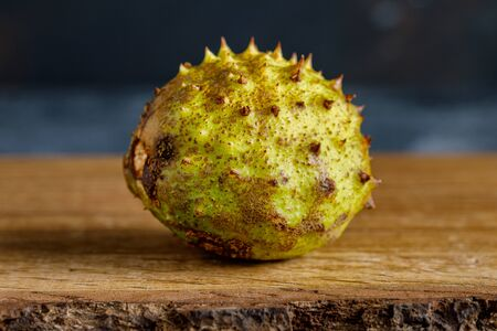 Unopened chestnut on a wooden surface green with spikes