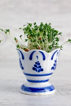 Cress salad sprouted from seeds in an egg stand on a wooden background