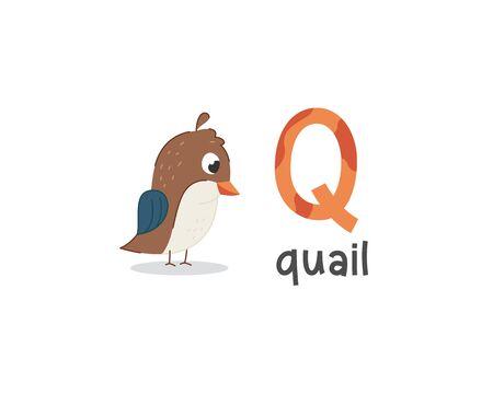 Alfabet uroczych zwierzątek do edukacji dzieci. Q jak przepiórka, seria ładnych alfabetów zwierząt