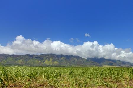 Suikergewassen boerderij in Hawaii.
