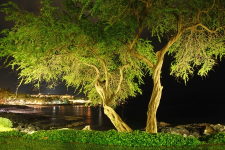 oneness: Green tropical tree at black night near the ocean.
