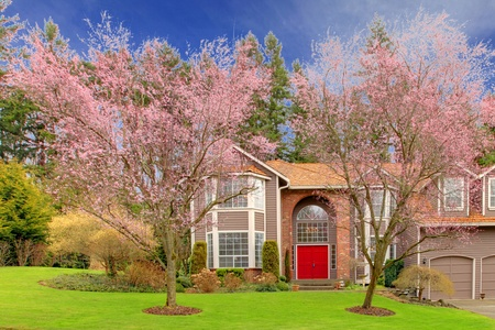 front of house: Cherry blossom and a large brown house.