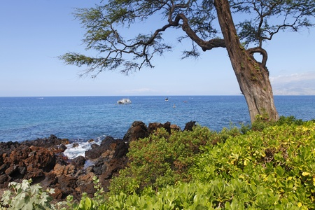 Tropical Tropica coast with large tree, ocean and island photo