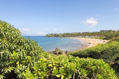 Maui Beach with hotels and greenery Stock Photo - 12632593