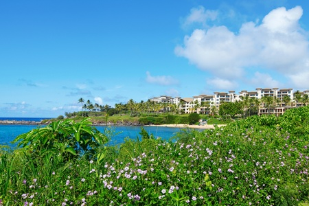 Maui Beach with hotels and greenery  photo