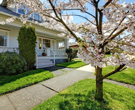 Small old white house with a blooming cherry tree and green grass. Stock Photo - 12621499
