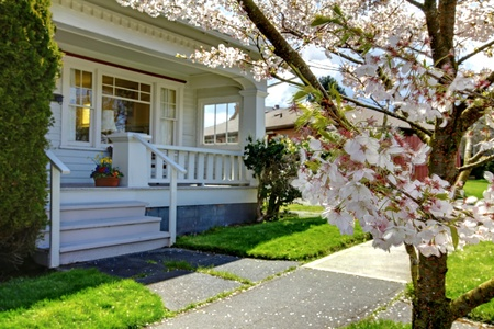 front of: Small old white house with a blooming cherry tree and green grass. Stock Photo