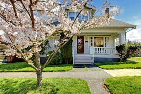 현관: 벚꽃 개화 및 녹색 잔디와 오래 된 작은 하얀 집.