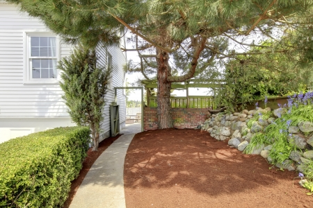 Side yard with walk way and large tree near white house with mulch. photo