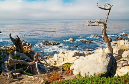 ca: Ocean blue water and shore with rocks and trees. Carmel, CA  Stock Photo