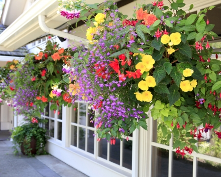 door leaf: Multiple hanging bastets with flowers outside of house windows. Stock Photo