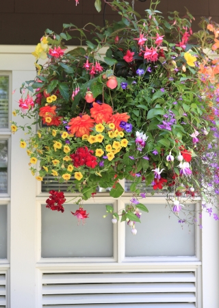 Flowers in hanging basket with white window and brown wall. Stock Photo