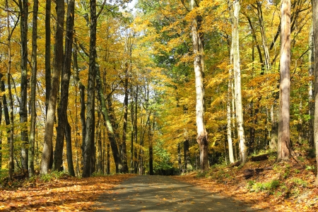 Fall road in the forest with orange leafs and large trees. photo