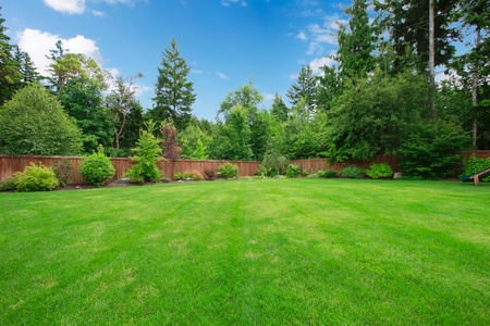 fenced: Green large fenced backyard with lawn trees