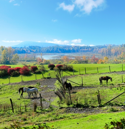 Dreamy ideal horse with red barns and fall trees. Stock Photo - 15990257