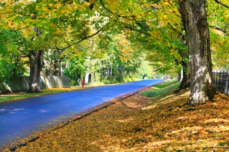 Fall blue road with orange leafs and large trees in Lenox, MA. photo