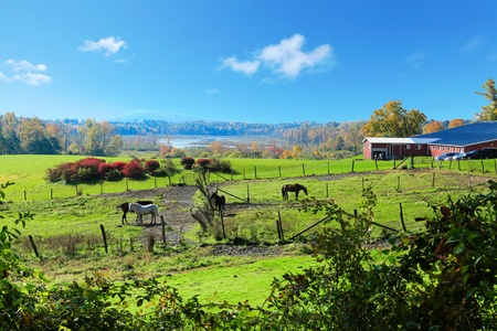 Dreamy ideal horse farm land with red barns and fall trees  photo