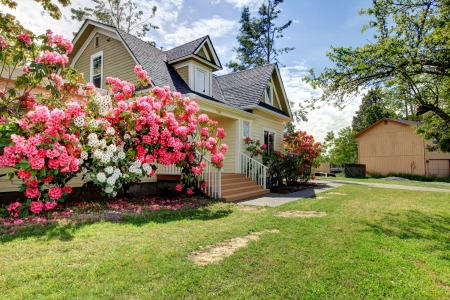 Yellow house exterior with spring blooming rhododendron Stock Photo - 17870112