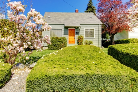 Small green house exterior with spring blooming magnolia trees. American house build in 1942.