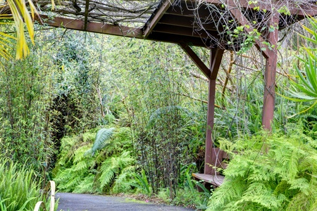 Kula Botanical Garden Maui Hawaii Covered Bridge Tropical Landscape Photo