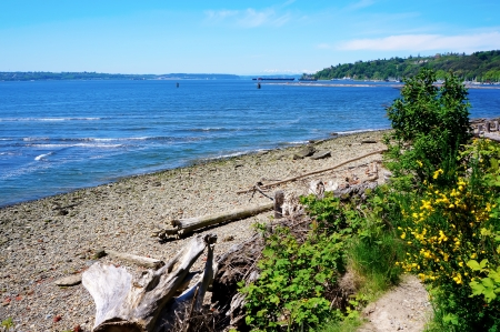 tacoma: Tacoma NE Browns Point Puget Sound. Beach with Northwest flowers. Stock Photo