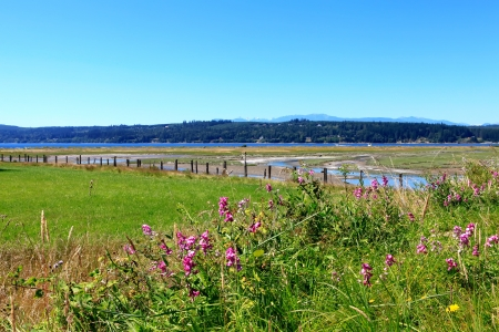 Marrowstone island.Washington State. Marsh land with salt water and northwest wild flowers.
