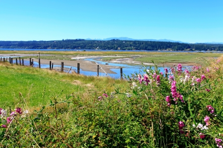Marrowstone island. Washington State. Marsh land with sal water and northwest wild flowers. Stock Photo - 18457023