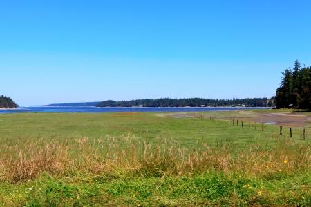 Marrowstone island.Washington State. Marsh land with sal water and northwest wild flowers. Stock fotó