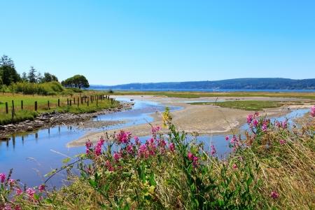 Marrowstone island. Olympic Peninsula. Washington State. Marsh land with sal water and northwest wild flowers. Stock fotó