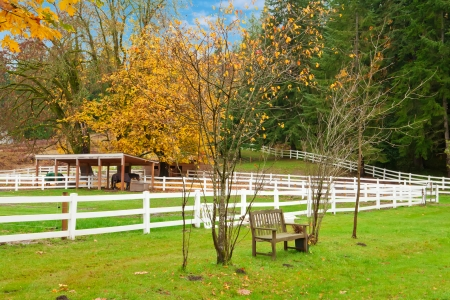Northwest horse rach with fall changing leaves and white fence. Stock Photo - 23131485