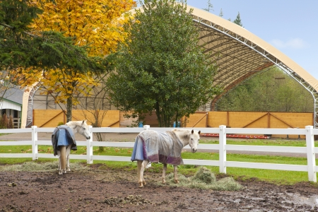 Northwest horse rach with fall changing leaves and white fence. Stock Photo - 23131494