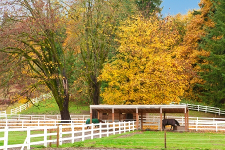Northwest horse rach with fall changing leaves and white fence. Stock Photo - 23131487