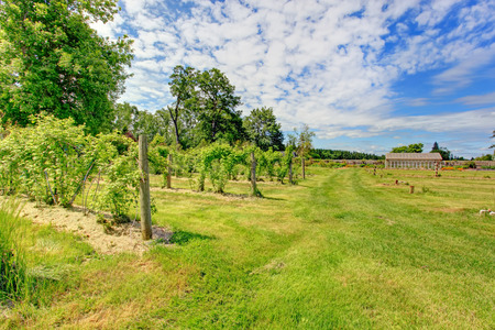 Summer landscape with beautiful farm garden and green house