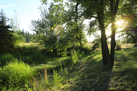america countryside: Amazing morning view. The sunlight beams is getting throught the trees Stock Photo