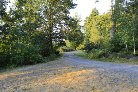 Fir trees, gravel road and sunlight beams getting through the trees Stock Photo - 25562142