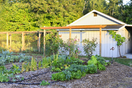 trellis: Wood shed with grape trellis and garden bed overlooking beautiful nature