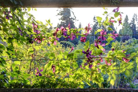 trellis: Farm wood trellis with flourishing beautiful flowers