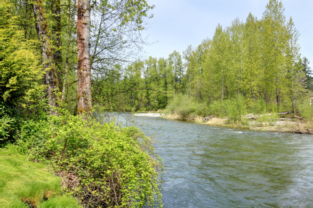 Green river in Auburn during spring. Washington State. Northwest. Beautiful birch trees. Reklamní fotografie