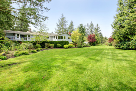 farm house: Amazing farm house backyard with green lawn, fir trees, bushes and trimmed hedges