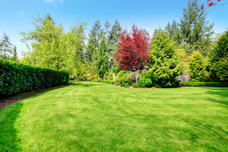 Beautiful green farm house backyard with green lawn, trees and trimmed hedges Stok Fotoğraf