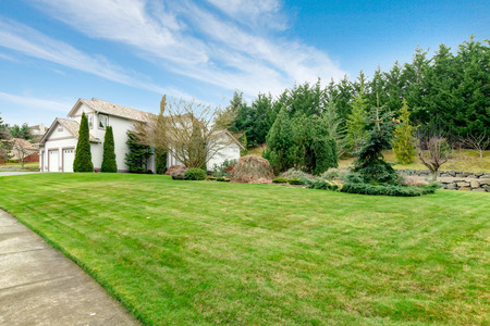 curb appeal: View of the clapboard siding house and big green lawn with fir trees  from sidewalk