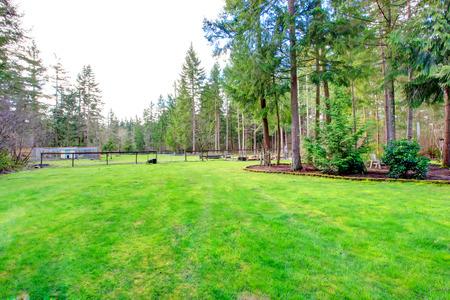 Mooie zomer achtertuin met groene gazon en rust buitenruimte in een klein bos