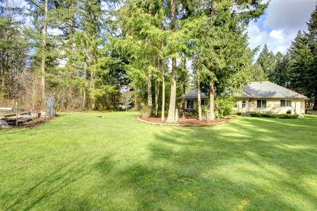 One story siding house with green lawn and fir trees.  View from the backyard. photo