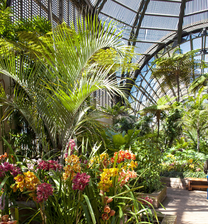 balboa: Balboa park botanical building with orchids and palm trees and interior walls