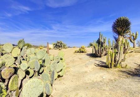 balboa: Balboa park in San Diego, cactus garden with desert plants.