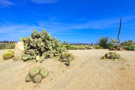 plantas del desierto: El Parque Balboa en San Diego, jard�n de cactus con plantas del desierto.